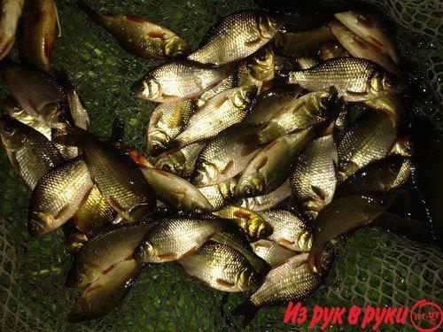 живец для рыбалки в москве с доставкой