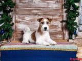 Профессиональная стрижка и модельный тримминг собак